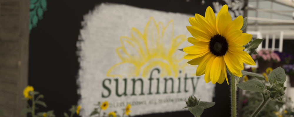 Sunfinity Sunflower And A Sign With The Sunfinity Logo